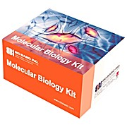 Modified Lowry Protein Assay Kit