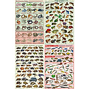 Reptiles and Amphibians Poster