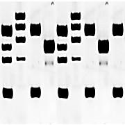 Human Normal Skin Cell Line Blot