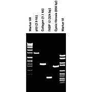 ROCHE Pwo DNA Polymerase