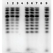ROCHE mini Quick Spin DNA Columns